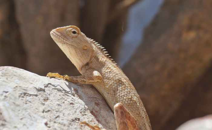 A LIZARD NAMED MELINDA and other thoughts on neighborliness